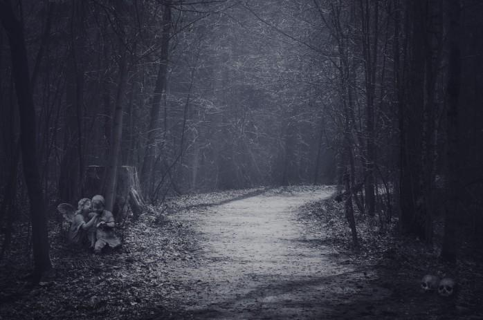 Forest Blog 1